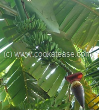 Prepare_Vazhai_Poo_Banana_Blossom
