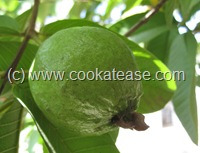 Guava_Koyya_Pazham_Amrood_Top_Indian_Fruit_Highest_Natural_Antioxidant_Level